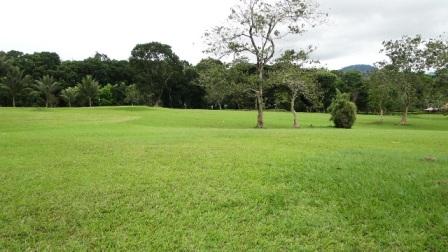 A green field!