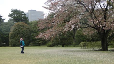Mesmerized by the Sakura Tree